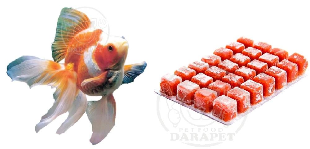 پخش انواع غذای ماهی آکواریوم
