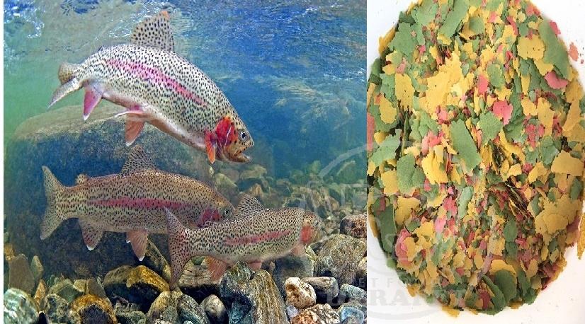 عرضه انواع غذا ماهی قزل آلا پرورشی