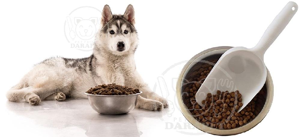 خرید انواع غذا خشک سگ ارزان برای سگ هاسکی
