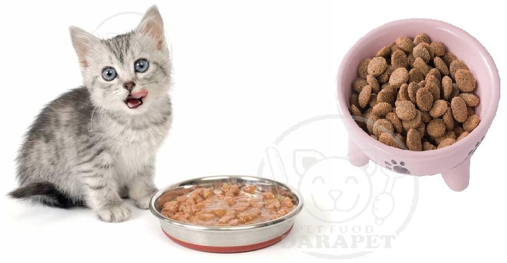 پخش انواع غذای بچه گربه 6 ماهه
