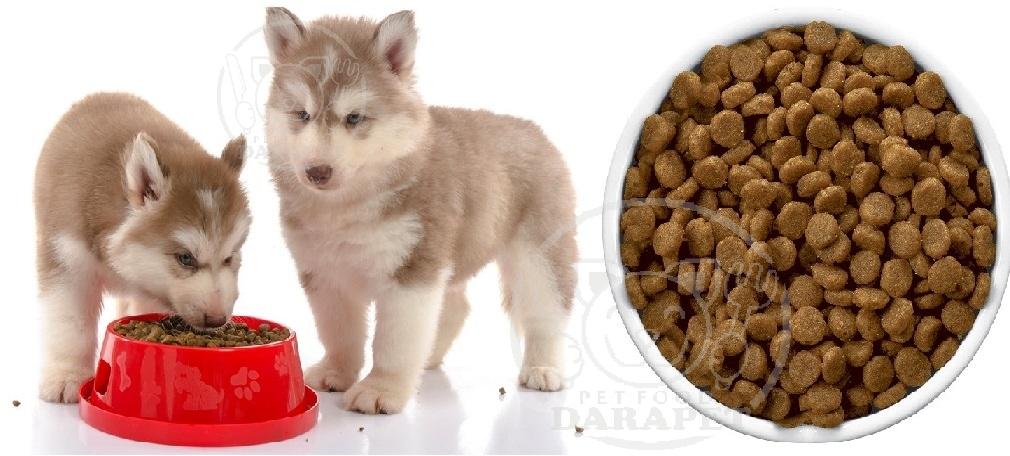 پخش عمده غذا خشک توله سگ هاسکی