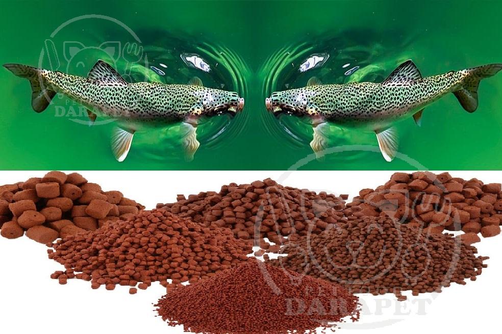 تولید انواع غذا برای ماهی قزل آلا رنگین کمان