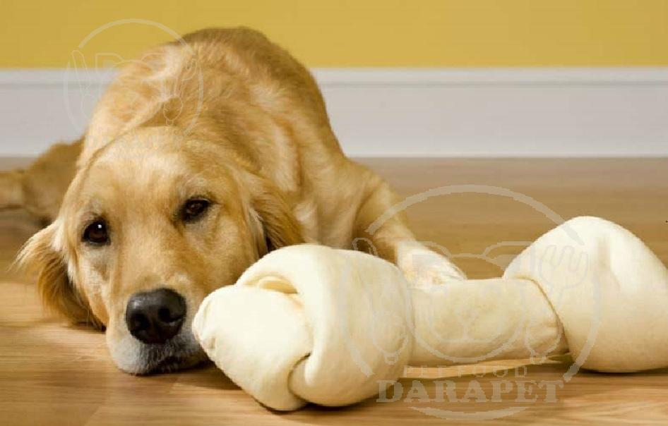 بهترین مدل غذای تشویقی سگ