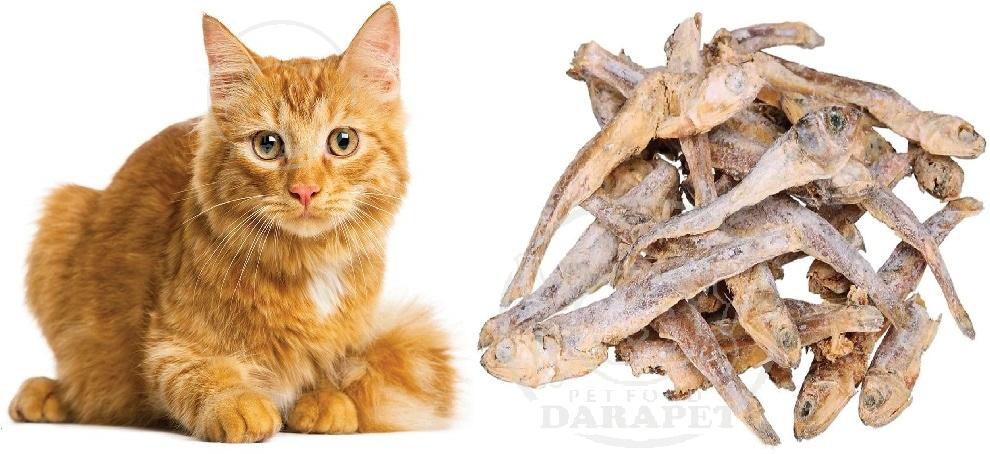 تاثیر مصرف تشویقی گربه طعم ماهی