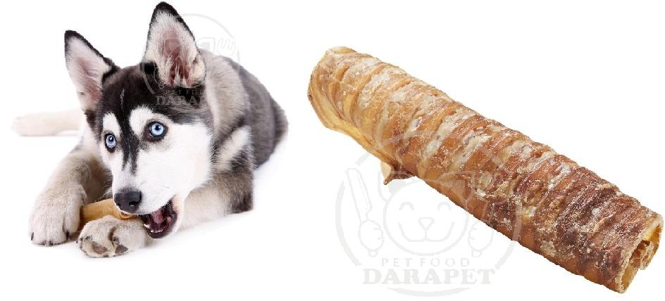 میزان استفاده غذای تشویقی سگ