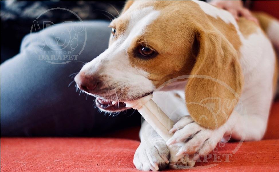 میزان مصرف استخوان تشویقی سگ
